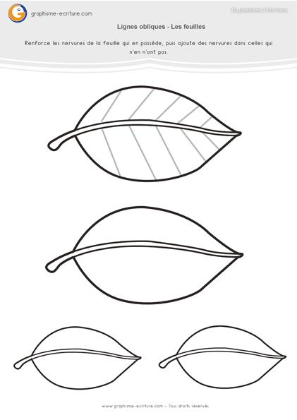 exercice-fiche- graphisme-écriture-moyenne-section-ms-traits-lignes-obliques-nervures-des-feuilles